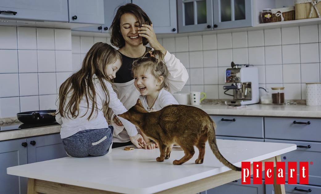 ¿Cómo Adaptar La Casa Para Tu Nuevo Gato?