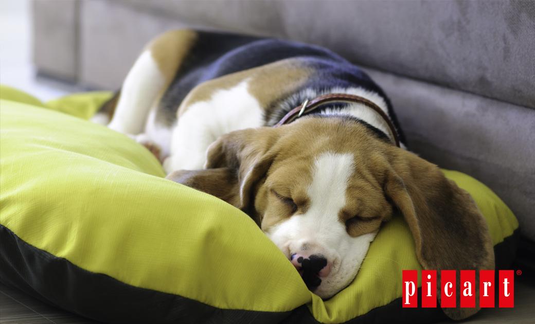 ¿Cómo Cuidar Las Almohadillas Plantares De Tu Perro?