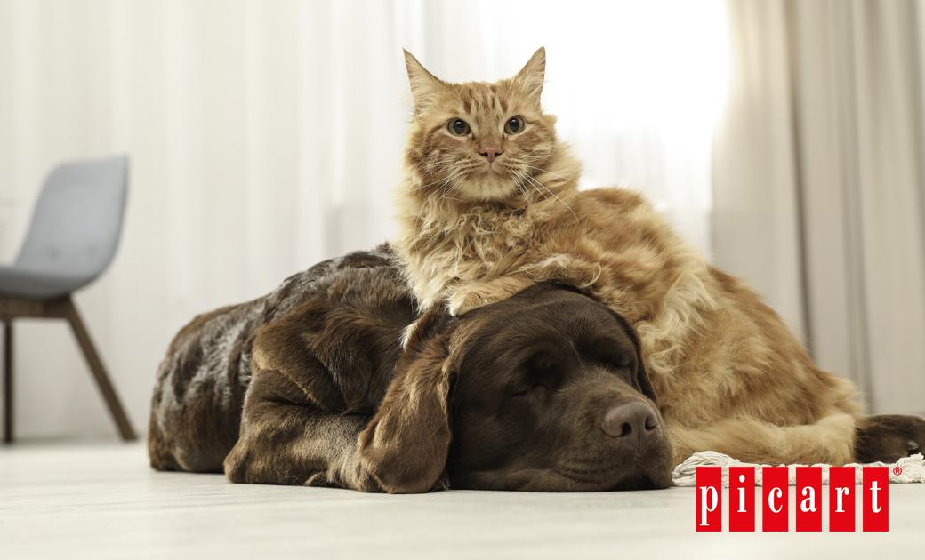 ¿Puede Mi Gato Comer Comida De Perro Y Viceversa?