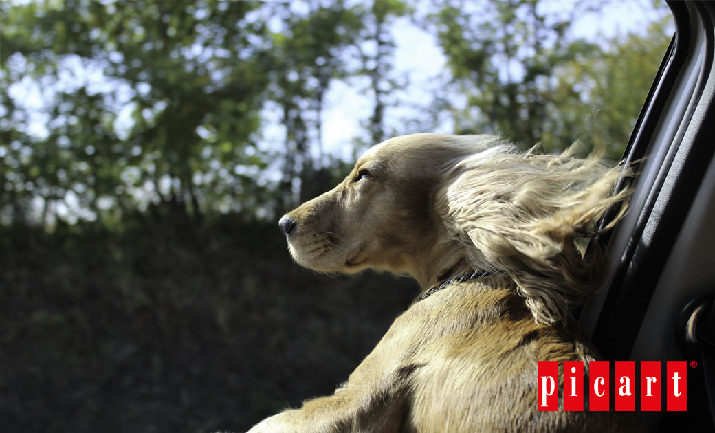 Tips Para Viajar Con Tu Perro
