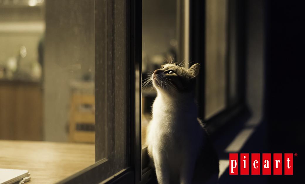 ¿Sabías Que Los Gatos Pueden Ver En La Oscuridad?