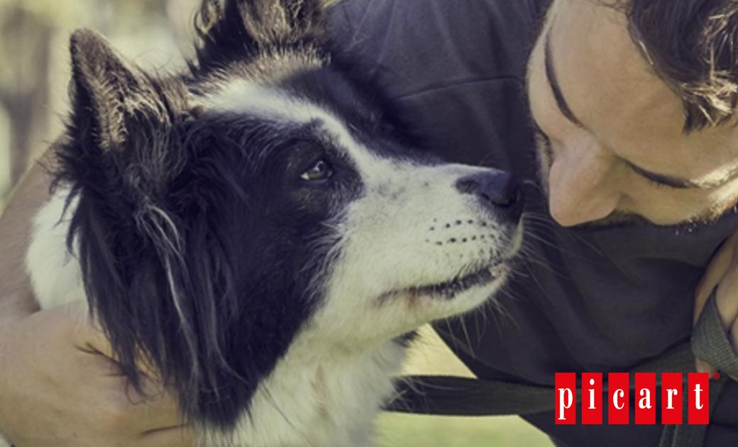 ¿Por Qué Es Importante Dejar Olfatear A Tu Perro Durante El Paseo?