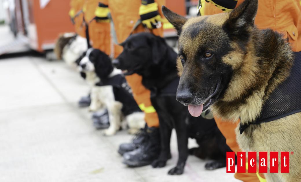 ¿A Qué Nos Referimos Cuando Hablamos De Perros De Trabajo?