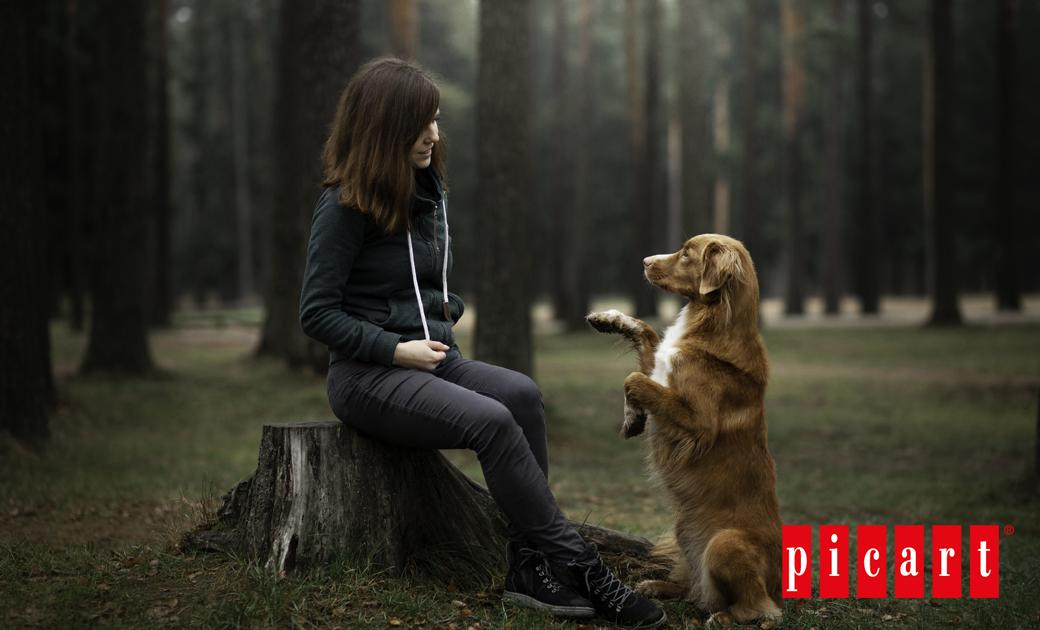 ¿Qué Diferencia Existe Entre La Artritis Y La Artrosis Canina?