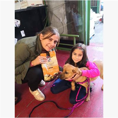 Picart Petcare Recolza El Projecte Del Refugi Solidari El Mas Dels Peluts