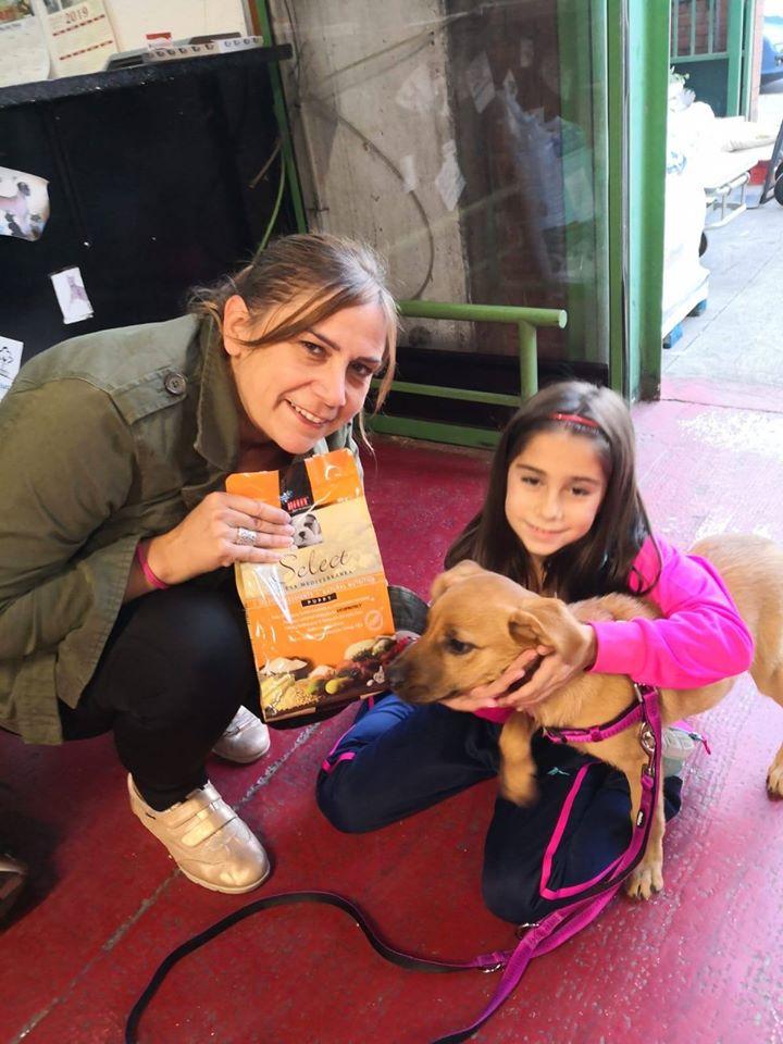 Picart Petcare Apoya El Proyecto Del Refugio Solidario El Mas Dels Peluts