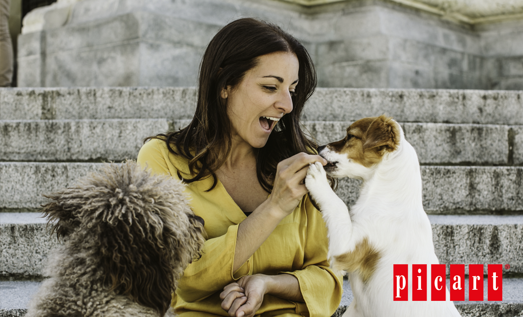 ¿Por Qué Es Importante El Refuerzo Positivo En Los Perros?