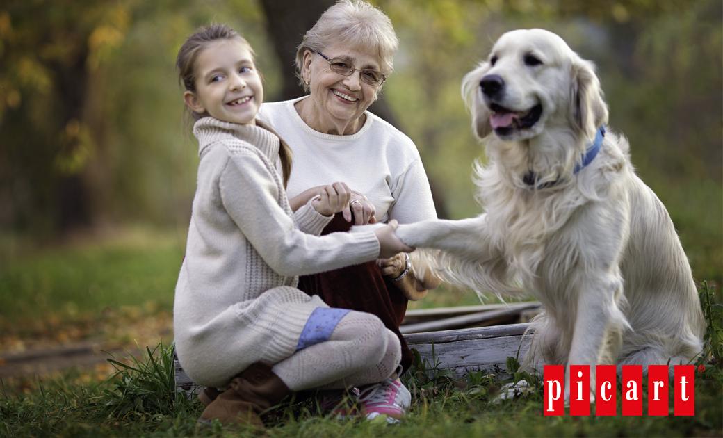 ¿Cómo Afrontar Los Retos Del Envejecimiento De Los Perros?