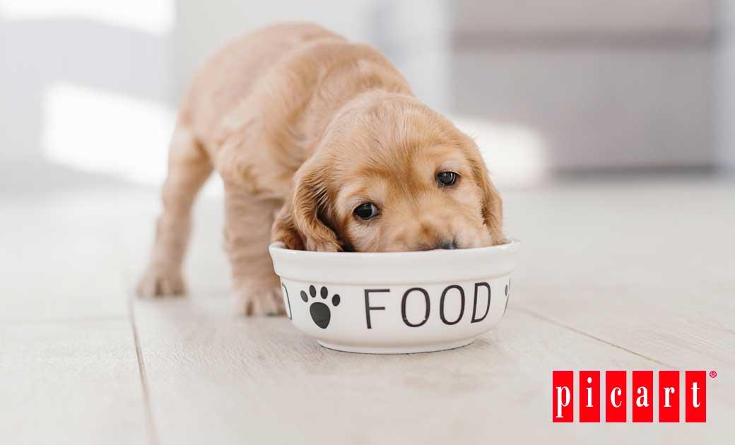 ¿Qué Cantidad Debería Comer Tu Perro En Función De Su Tamaño?