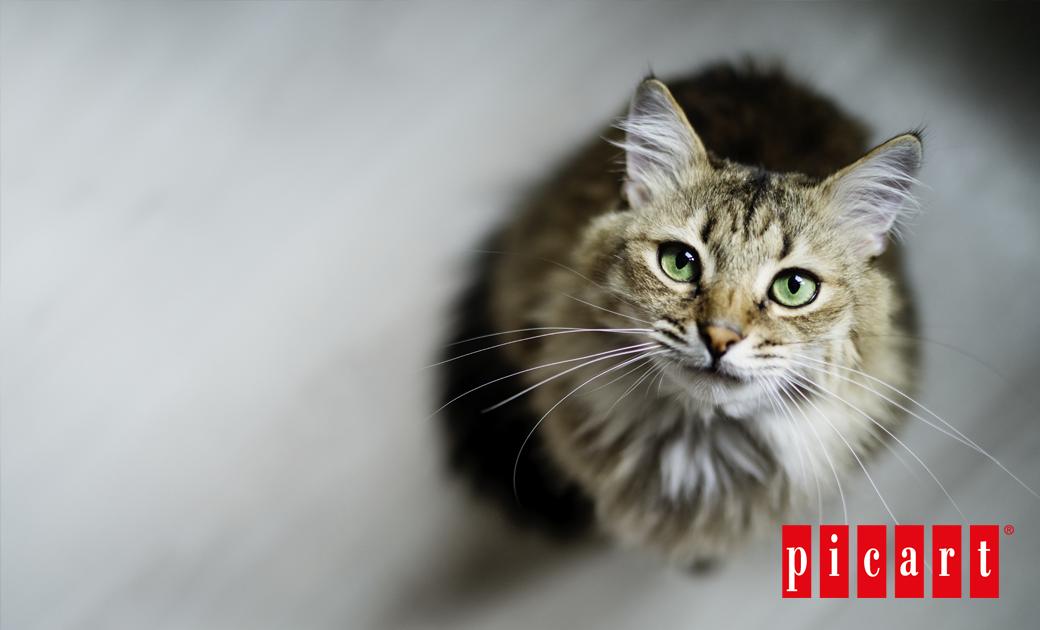 ¿Cuáles Son Las Enfermedades Oculares Más Comunes En Los Gatos?