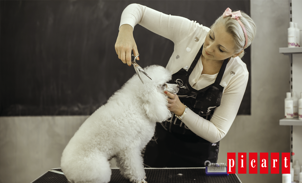 ¿Es Necesario Que Un Perro Vaya A La Peluquería?