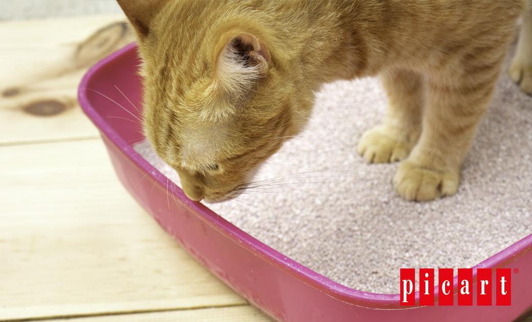 ¿Cómo Limpiar El Arenero De Tu Gato Y Evitar Que Huela Mal?