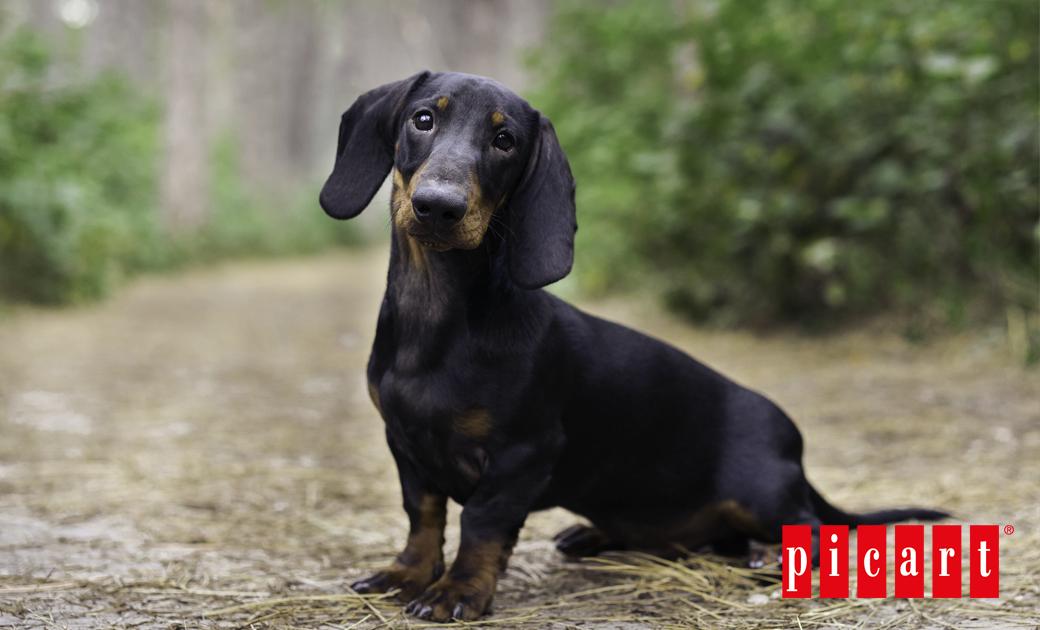 ¿Qué Necesidades Tiene Tu Perro En Primavera?