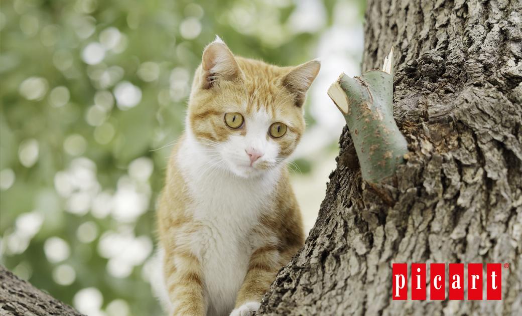 ¿Qué Hacer Si Mi Gato Se Escapa De Casa?