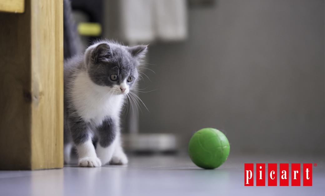 ¿Cuáles Son Los Juguetes Más Divertidos Para Tu Gato?