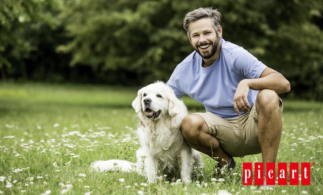 ¿Cómo Se Adiestra A Un Perro?