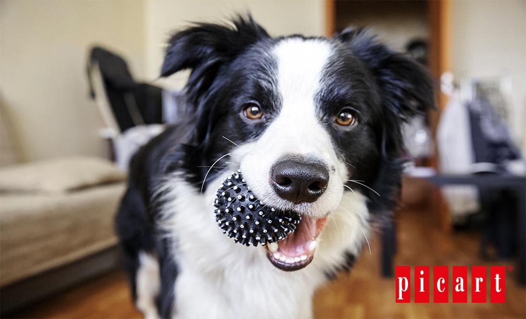 BlogpicartConsejos Para Enseñar A Tu Perro A Buscar Objetos