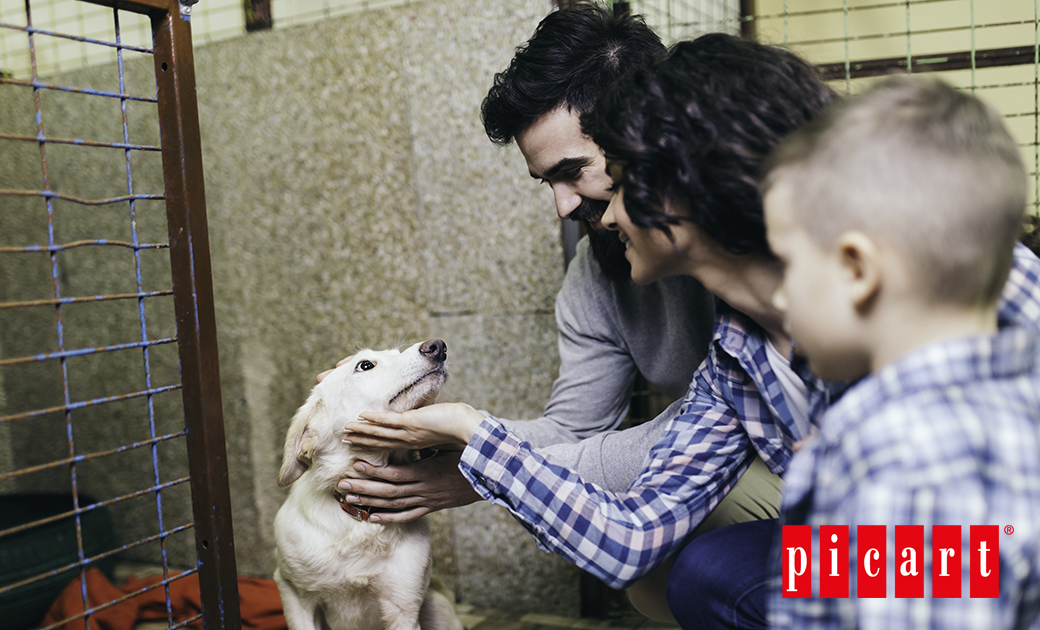 ¿Cómo Tratar A Un Perro En Los Primeros Días De Adopción?