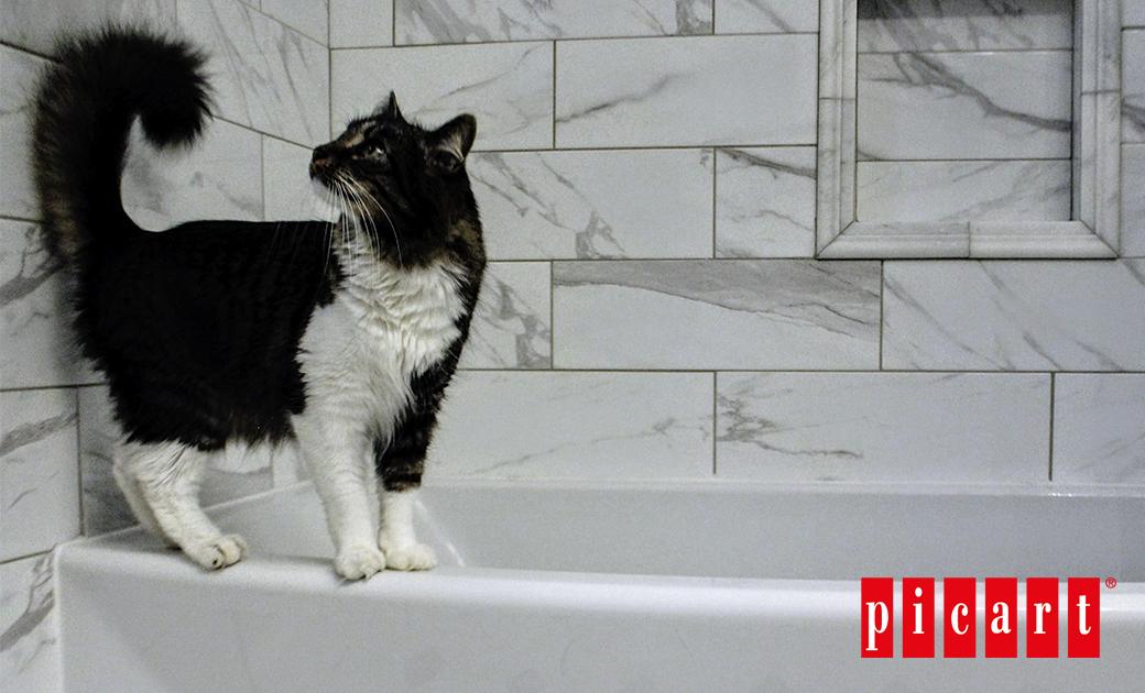 ¿Con Qué Frecuencia Tenemos Que Bañar A Nuestro Gato?
