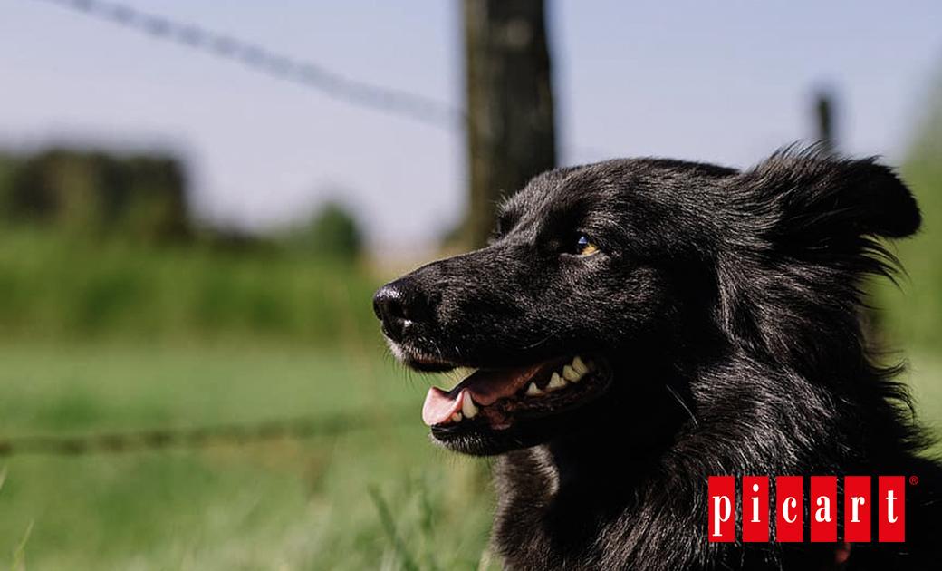 Perro, El Mejor Amigo Del Hombre Desde La Prehistoria