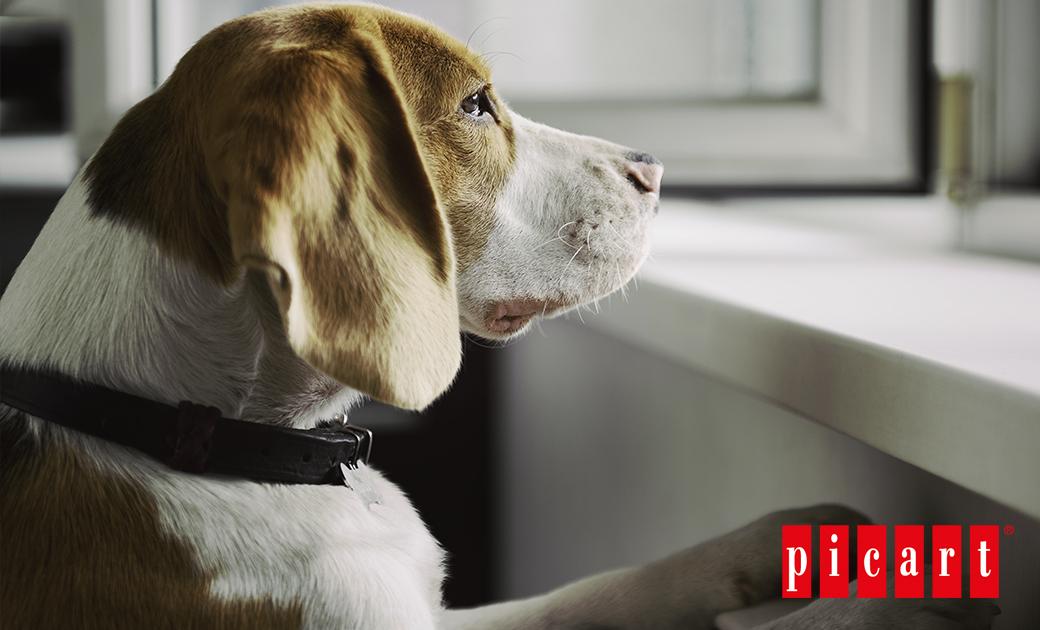 ¿Los Perros Sufren Ansiedad Por Separación?