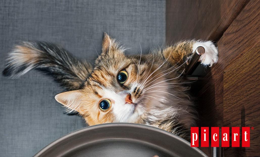 ¿Es recomendable elevar el comedero de tu gato?-picart
