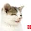 Los Gatos Estornudan?