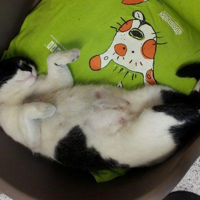 Así Están Los Gatos Alimentados Con Picart